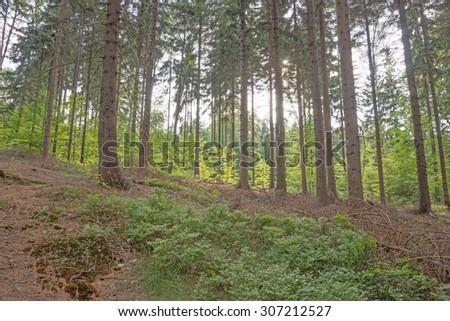 Looking into the woods in Saxony, Germany