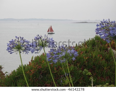 looking out to see with Agapanthus in foreground - stock photo