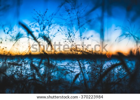 Looking out to the ocean and let light through a grassy field. The shallow depth of field creates a dreamy surreal feel.  - stock photo