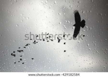 Looking through a glass window pane on a rainy day of a raptor hunting birds. - stock photo