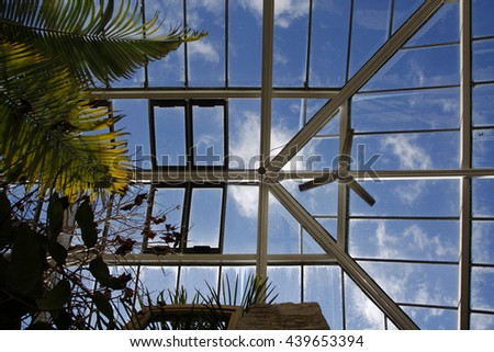 Looking up at a large greenhouse roof and ferns