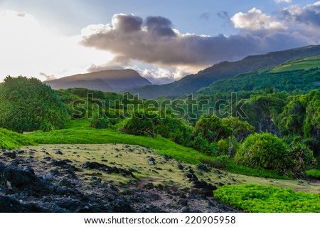 Looking up at a lush tropical valley on the Road to Hana, Maui, Hawaii, USA - stock photo