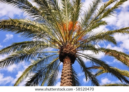Looking up at a single palm tree against cloudy blue sky.
