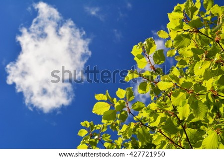 Looking up into the blue sky with one cloud from underneath a tree with new spring leaves - stock photo