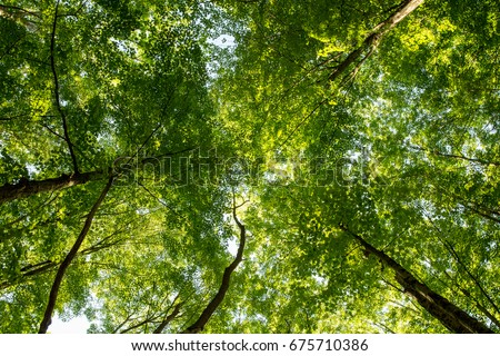 Looking up into the canopy of trees in the forest nature background. & Looking Into Canopy Trees Forest Nature Stock Photo 675710386 ...