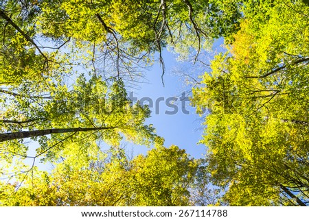 Looking Up Through Forest Canopy - stock photo