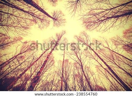 Looking up through leafless trees, retro filtered background.  - stock photo