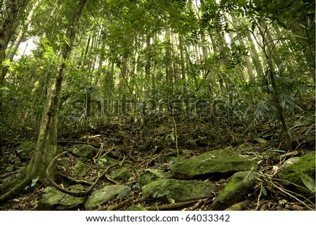 looking up through the trees in a rain forest, also showing some of the forest floor, gold coast hinterland, Queensland Australia. - stock photo
