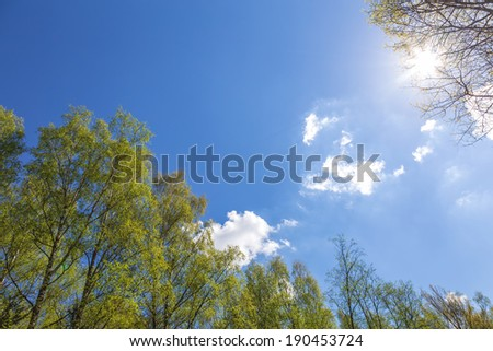 Looking up to the blue sky in forest. Ecological concept - stock photo