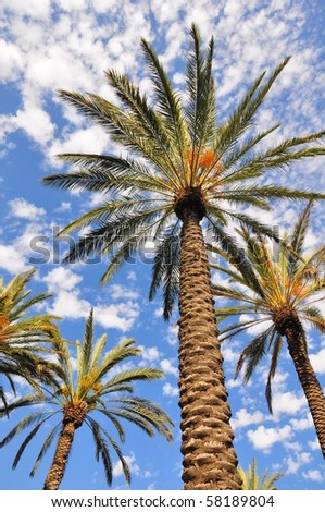 Looking upwards at palm trees against a cloudy, blue sky. - stock photo