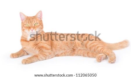 Looking young funny red cat, isolated on white - stock photo