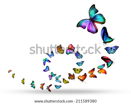Loop of many different butterflies - stock photo