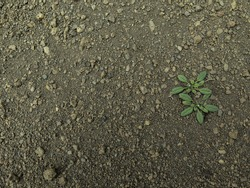 Grunge muddy texture free stock photo by bjorgvin gudmundsson on loose soil with a spontaneous herb growing texture nobody sciox Images