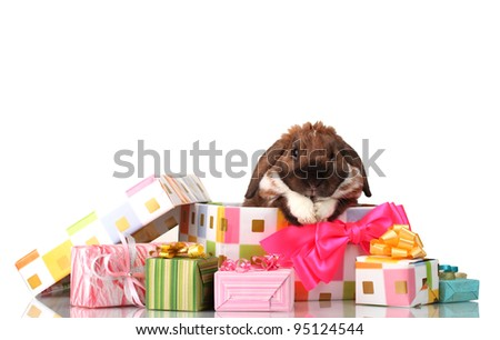 Lop-eared rabbit in a gift box with pink bow isolated on white - stock photo