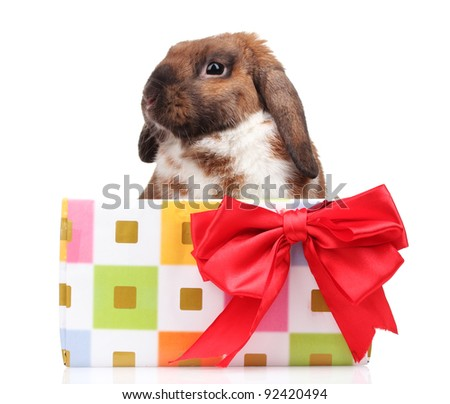 Lop-eared rabbit in a gift box with red bow isolated on white - stock photo