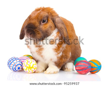 Lop-eared rabbit with eggs isolated on white - stock photo