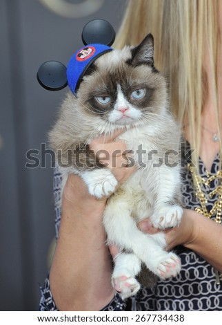 "LOS ANGELES, CA - MARCH 1, 2015: Grumpy Cat at the world premiere of ""Cinderella"" at the El Capitan Theatre, Hollywood.  - stock photo"