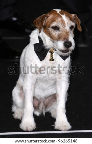 LOS ANGELES - FEB 26:  Uggie arrives at the 84th Academy Awards at the Hollywood & Highland Center on February 26, 2012 in Los Angeles, CA. - stock photo