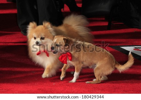 LOS ANGELES - MAR 5: Dogs on the red carpet at the premiere of 'Mr. Peabody & Sherman' at Regency Village Theater on March 5, 2014 in Los Angeles, California - stock photo
