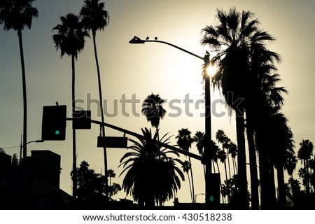 Los Angeles palms silhouette, Hollywood, California - stock photo