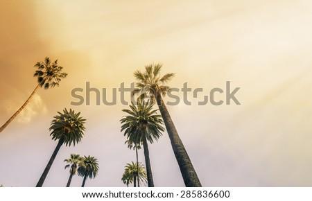 Los Angeles, West Coast Palm Tree Sunshine - stock photo