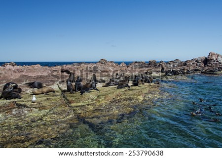 los islotes mexico espiritu santu island sea lion retreat - stock photo