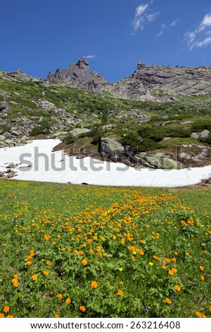 lose-up of orange globe-flower at the foot of the Ergaki Western Sayan  on a sunny summer day