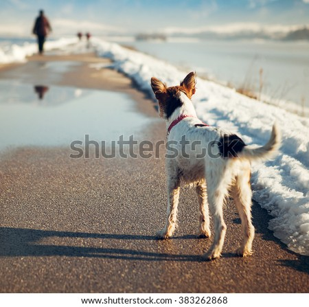 Lost dog on the road - stock photo