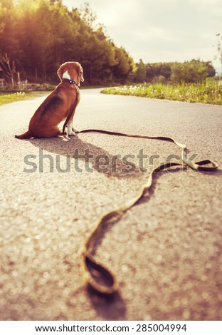 Lost dog sitting on the road alone - stock photo