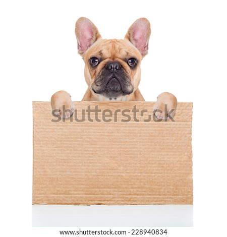 lost,homeless  dog with cardboard ,isolated on white background, closed eyes looking so sad - stock photo