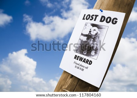 lost puppy poster on a light post - stock photo