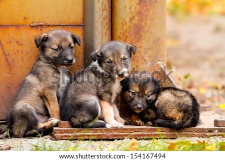 Lost puppy stand together - stock photo