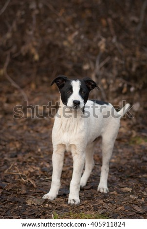 Lost stray puppy is waiting for mom in sinister place - stock photo