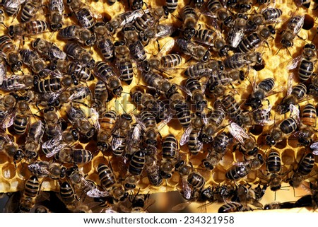lot of bees working on making honey           - stock photo