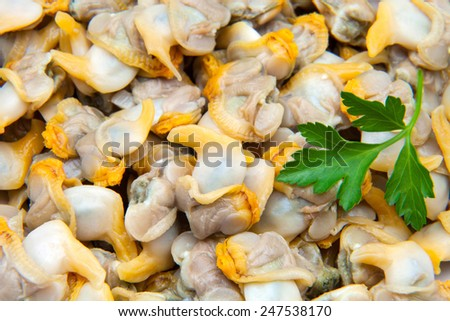 lot of clams for trade - stock photo