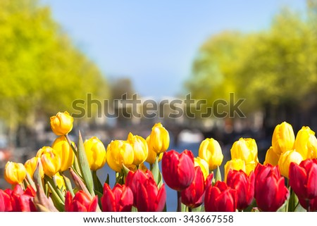 Lot of colorful tulips and background view to a bridge and row of trees in Holland/Tulip Blossoms in Amsterdam