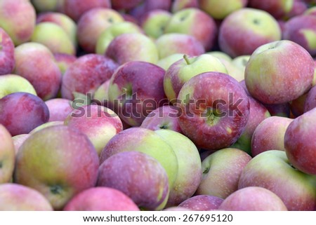 Lot of empire apples picked in autumn - stock photo