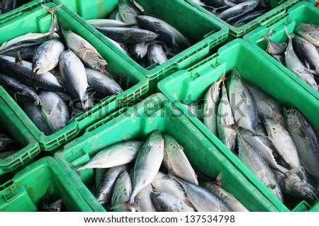 lot of fish in tray,pattani market THAILAND. - stock photo