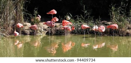 lot of flamingos on water in summer