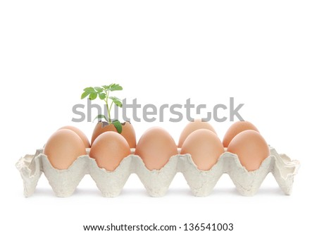 Lot of fresh brown eggs in a carton box and green plant grows in one of them.