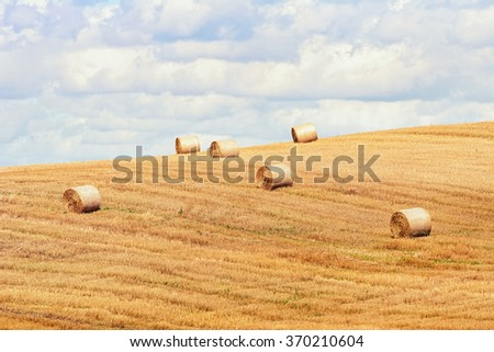 Lot of Haystacks on the Field in Lithuania - stock photo