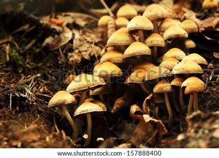 lot of mushrooms growing in forest - stock photo