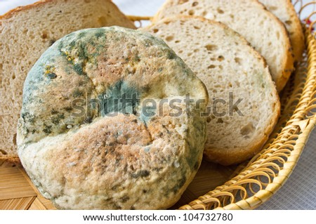 Lot of old inedible food - stock photo