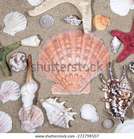 Lot of Sea shells and starfishes on sand as background