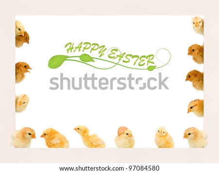 Lots of baby chicken in different positions on a frame - copyspace - stock photo