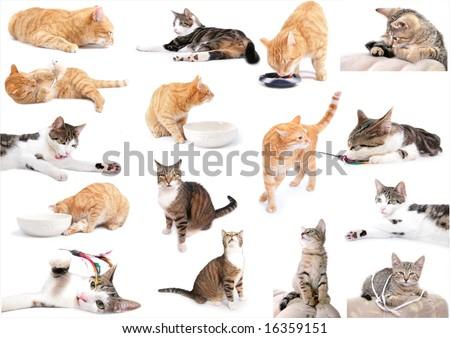 lots of cat attitudes - stock photo