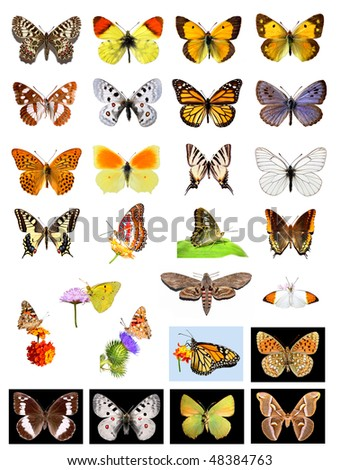 Lots of different multicolored butterflies on white and black background