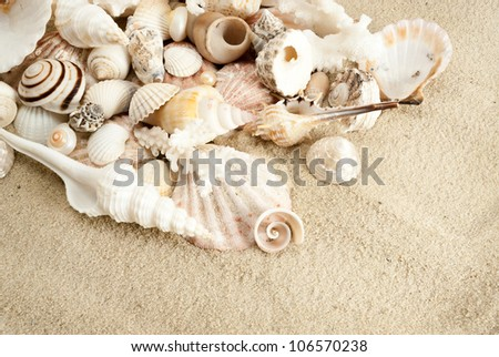 Lots of different seashells on a sand.