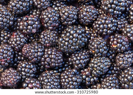 Lots of fresh blackberries close-up - stock photo