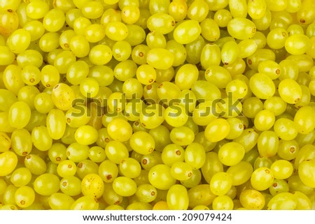 Lots of Fresh Grapes, Top View Closeup Background - stock photo